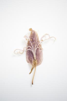 stilleven bloem 2